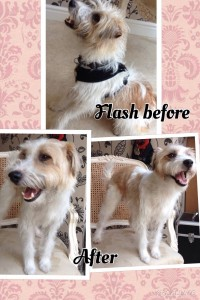 Flash Before and After Nov 15