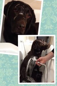 Harley in the bath