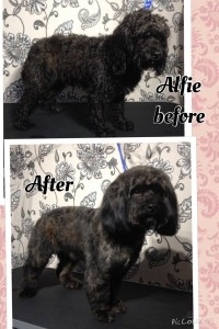 Alfie Before and After