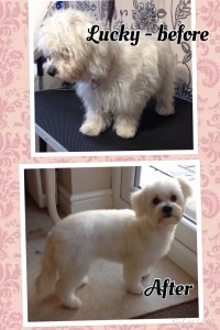 Lucky Before and After Nov 15