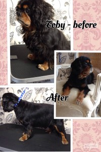 Toby Before and After (1)